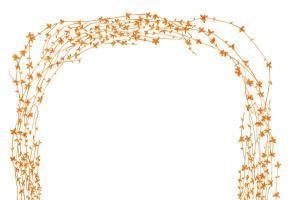 花卉边框33