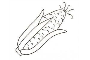 玉米简笔画步骤图 玉米怎么画