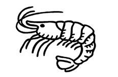 皮皮虾怎么画 虾米简笔画图片