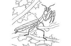 卡通螳螂简笔画图片 螳螂怎么画