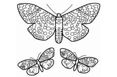 三只花蝴蝶简笔画步骤图片大全