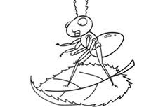 乘坐树叶船的蚂蚁简笔画图片怎么画