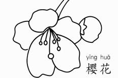 简单的樱花简笔画图片 樱花怎么画