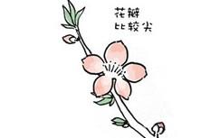 桃花水彩简笔画图片 桃花怎么画