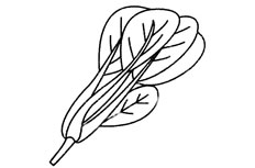 菠菜简笔画图片 菠菜怎么画