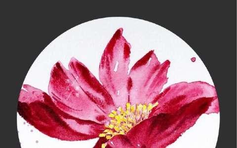 简单唯美的水彩画图片,格桑花水彩画