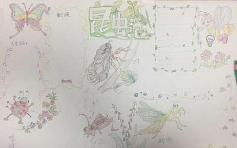 法布尔昆虫记手抄报版面设计图片