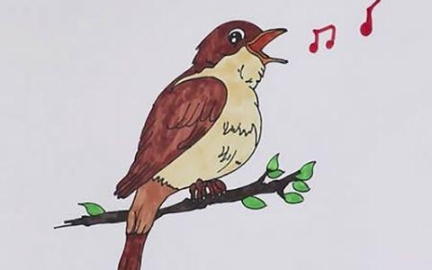 夜莺小鸟简笔图片 夜莺小鸟如何画
