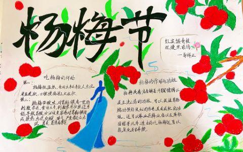 杨梅节手抄报图片 杨梅的作用与功效