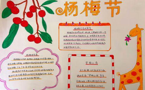 关于杨梅节手抄图片 杨梅的来源