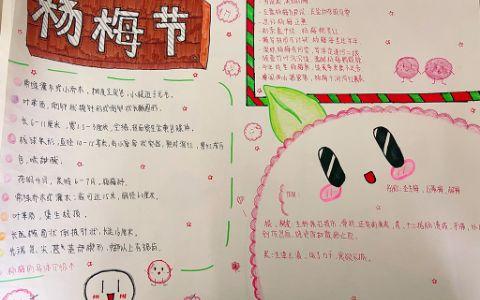 简单漂亮的杨梅节手抄报图片