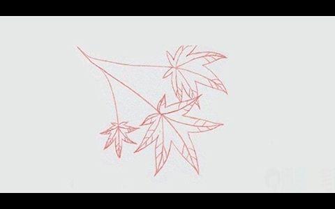 枫叶植物简笔画图片 枫叶是怎么画的