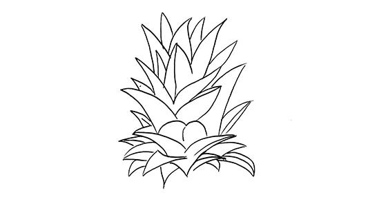 菠萝简笔画图片 菠萝如何画的