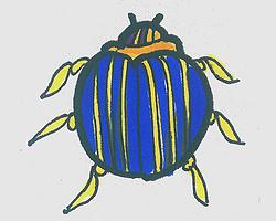 儿童简笔画有颜色瓢虫怎么画简单又好看