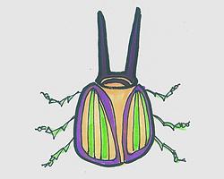 简笔画图片有颜色甲壳虫怎么画 甲壳虫的画法