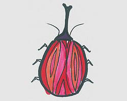 简笔画图片甲壳虫 可爱甲壳虫的画法