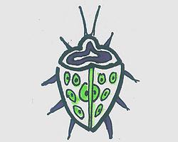 简笔画图片带颜色瓢虫 小瓢虫的画法