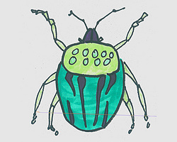 简笔画图片有颜色瓢虫 瓢虫的画法