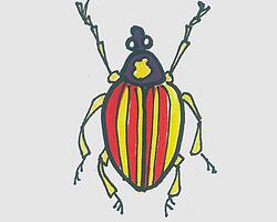 简笔画图片彩色甲虫的画法