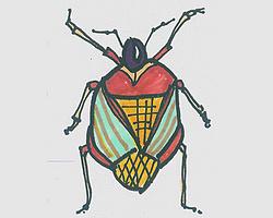 儿童简笔画甲虫怎么画 可爱甲虫的画法