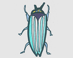 儿童简笔画甲虫 一步一步教小甲虫的画法